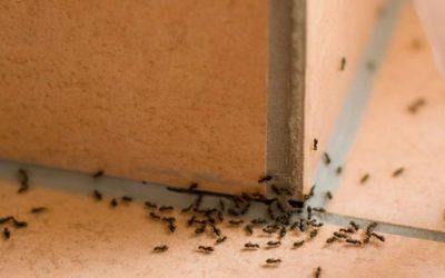garden-ants